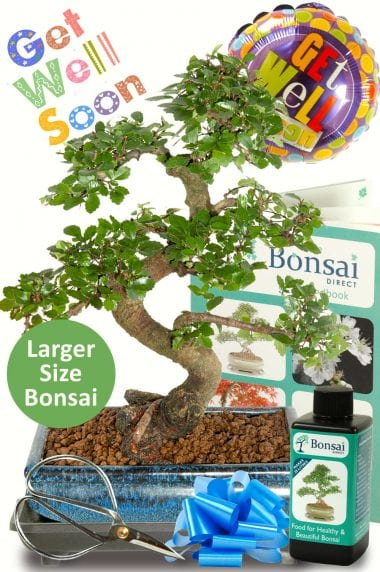 Stunning Larger Get Well Soon Bonsai Gift