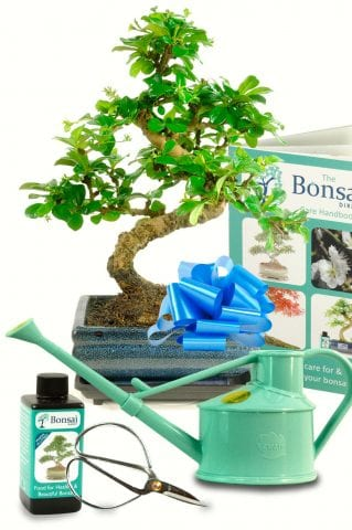 Amazing Twisty Flowering Carmona Bonsai Tree Kit