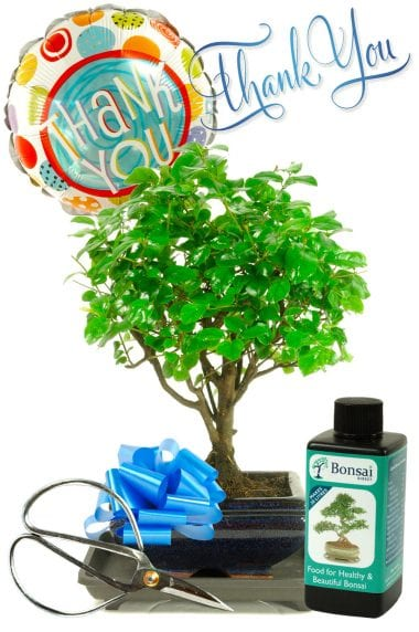 Thank You Baby Chinese Sweet Plum Bonsai Gift