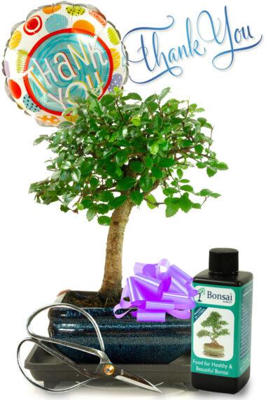 Thank You Bonsai Gift Set