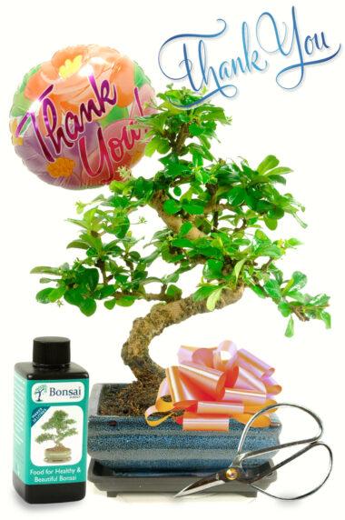 Thank You Flowering Bonsai Kit