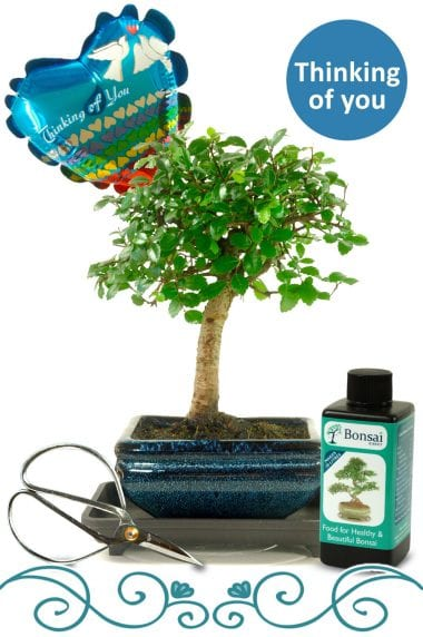 Thinking of You Indoor Bonsai Gift