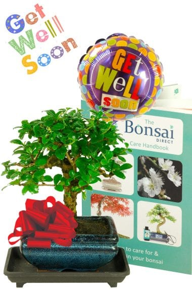 Value Flowering 'Get Well Soon' Bonsai Gift