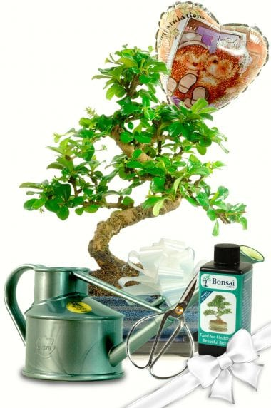 Wedding Congratulations - Complete Bonsai Gift Set with Watering Can