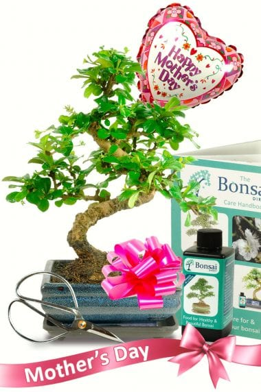 With love on Mothers Day bonsai gift for sale