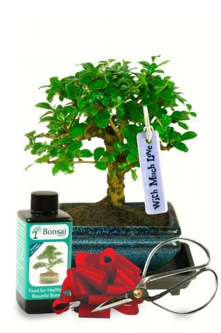 With much love baby bonsai tree gift