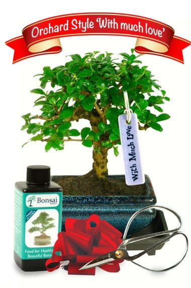With much love indoor bonsai kit