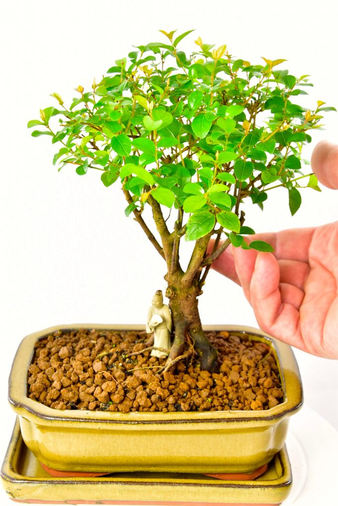 Cute sweet plum bonsai with figurine