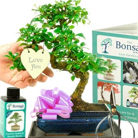 The Perfect Gift For Your Wife Bonsai Trees For Sale Uk