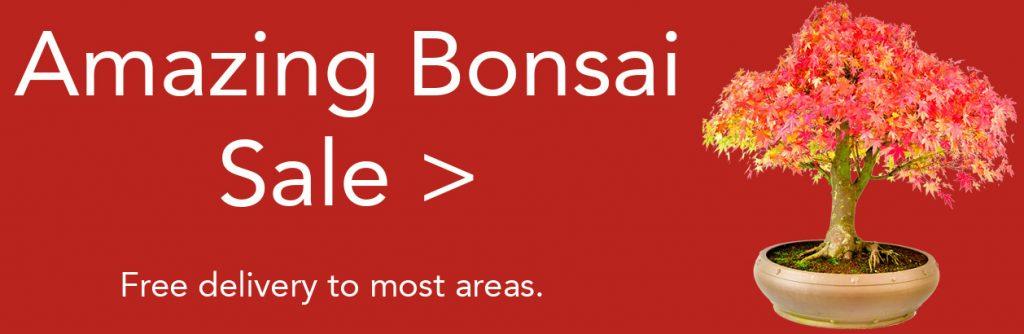 Bonsai Tree Sale at Bonsai Direct this autumn