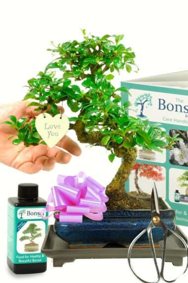 Larger flowering bonsai tree gift - for her
