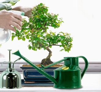 Watering bonsai articles