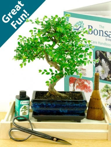 Fabulous beginners indoor bonsai tree kit for sale