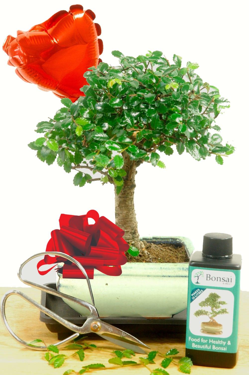 Beginners Baby Bonsai Valentines Gift