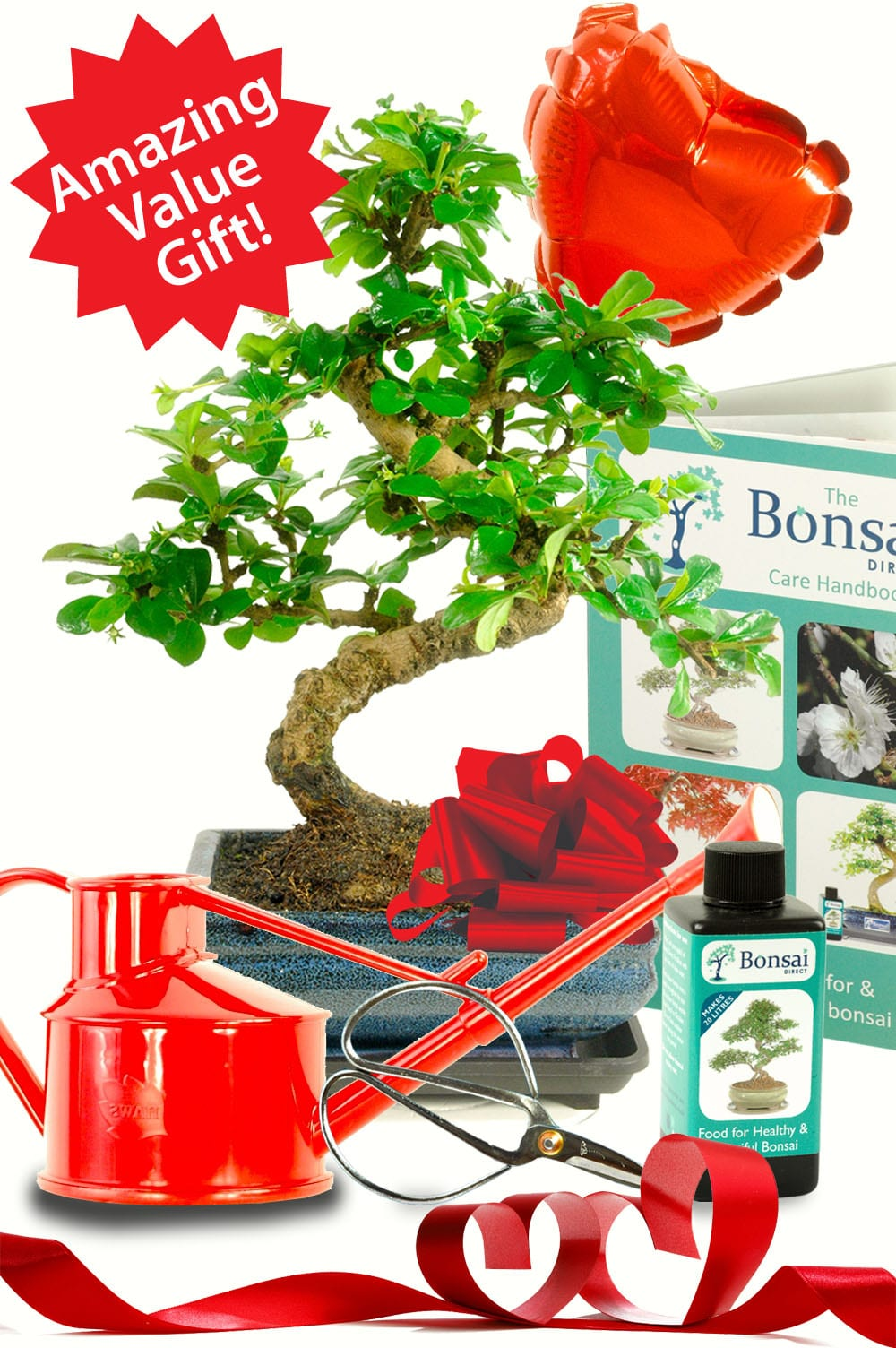 Outstanding Valentines day bonsai tree gift set