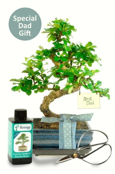 Best dad bonsai gift set