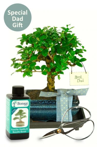 Best dad baby bonsai gift set