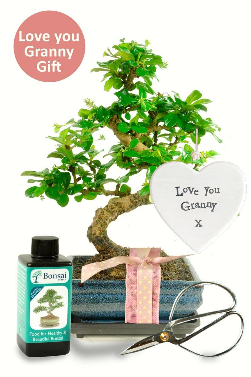Love you Granny bonsai gift for sale