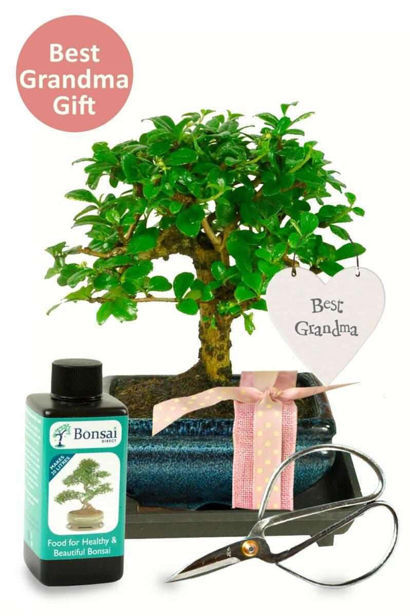 Best Grandma cute flowering bonsai kit