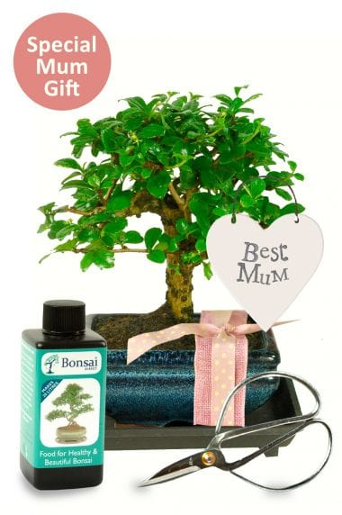 Special mum bonsai gift baby