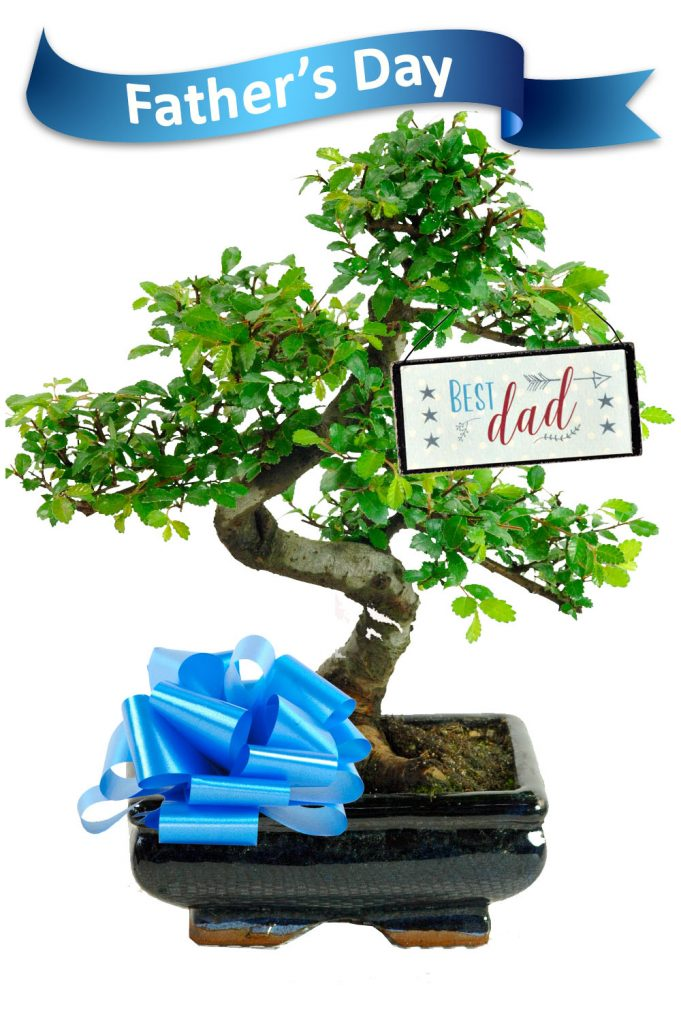 Special Dad bonsai for fathers day