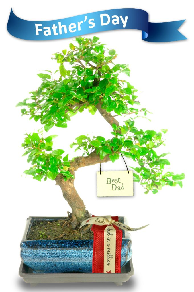 Sweet Plum Father's Day Bonsai Gift