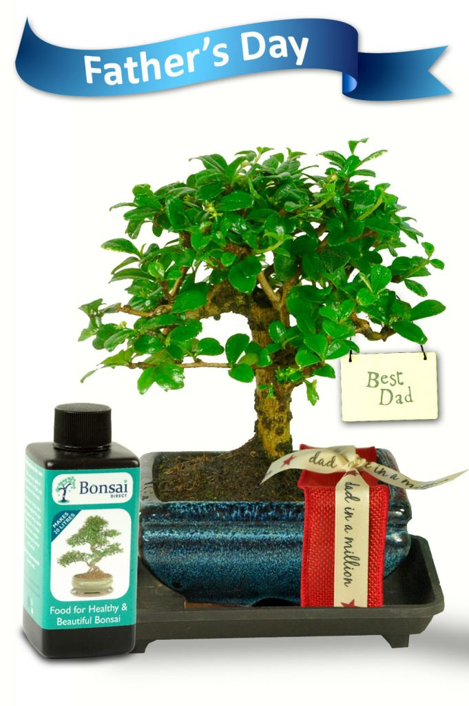 Fathers day bonsai for sale