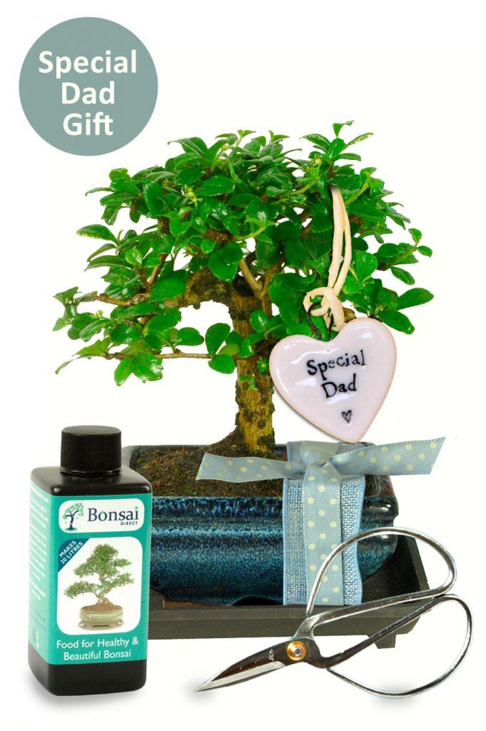 Special Dad heart bonsai