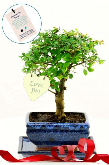 Cute bonsai with the meaning of love & devotion