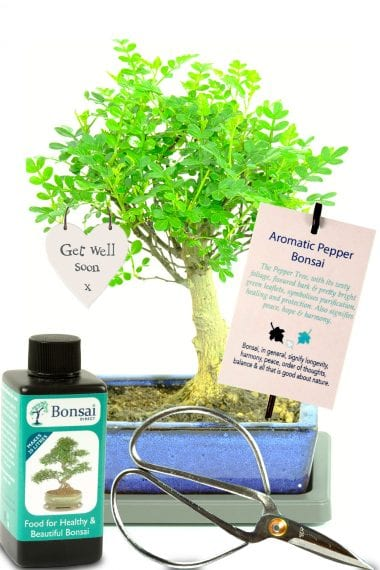 Bonsai kit with meaning good health & well being