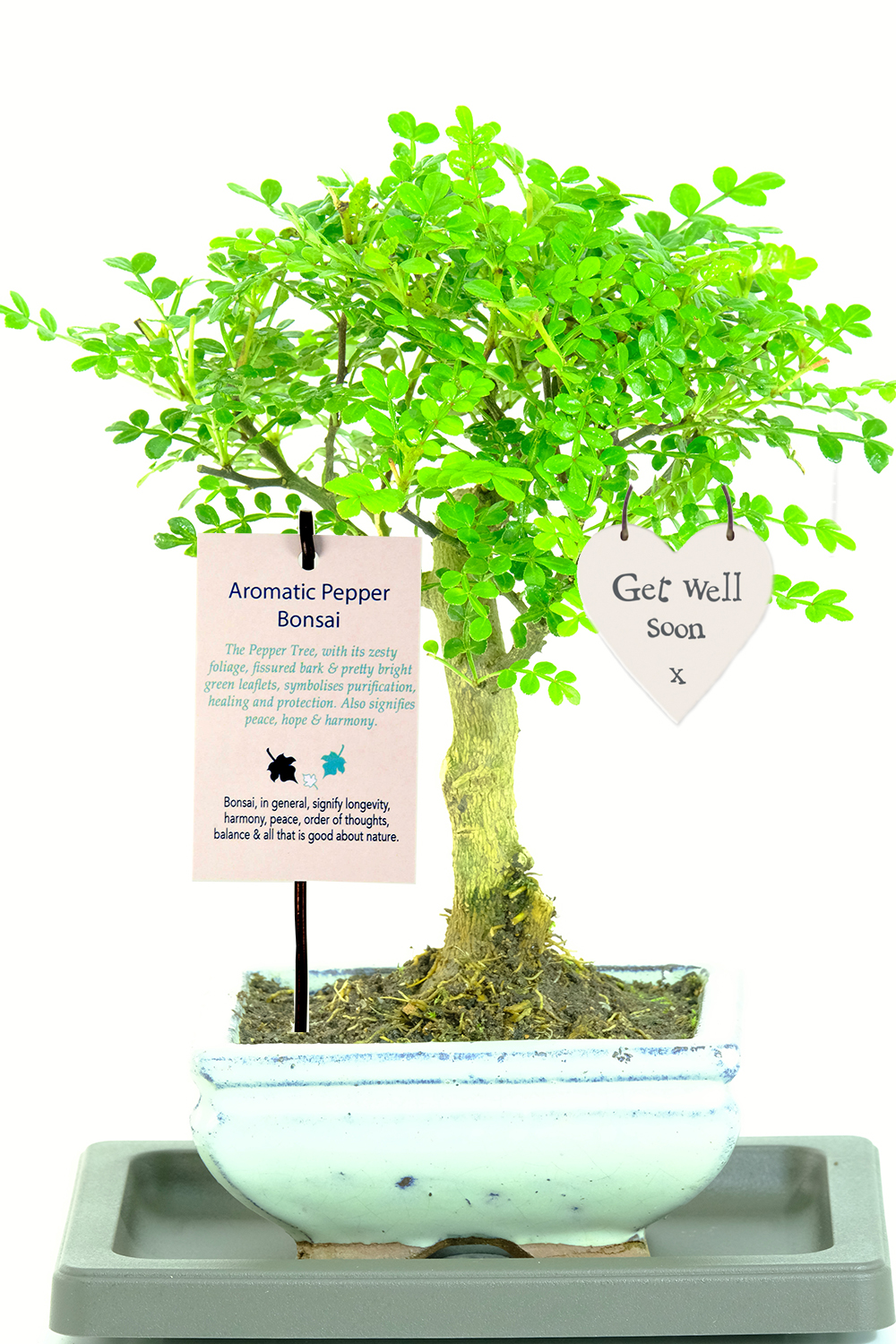 Zesty Aromatic Orchard Style Indoor Bonsai Symbolising Health Healing Get Well Soon Tag