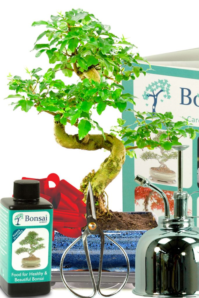 The perfect bonsai tree kit for sale from the experts