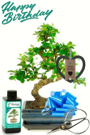 Lovely birthday bonsai gift with black birthday heart shaped tag