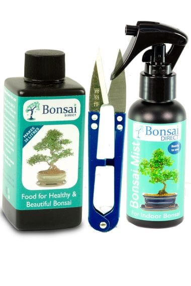 Bonsai feed, snips and mist - The Bonsai basics for care