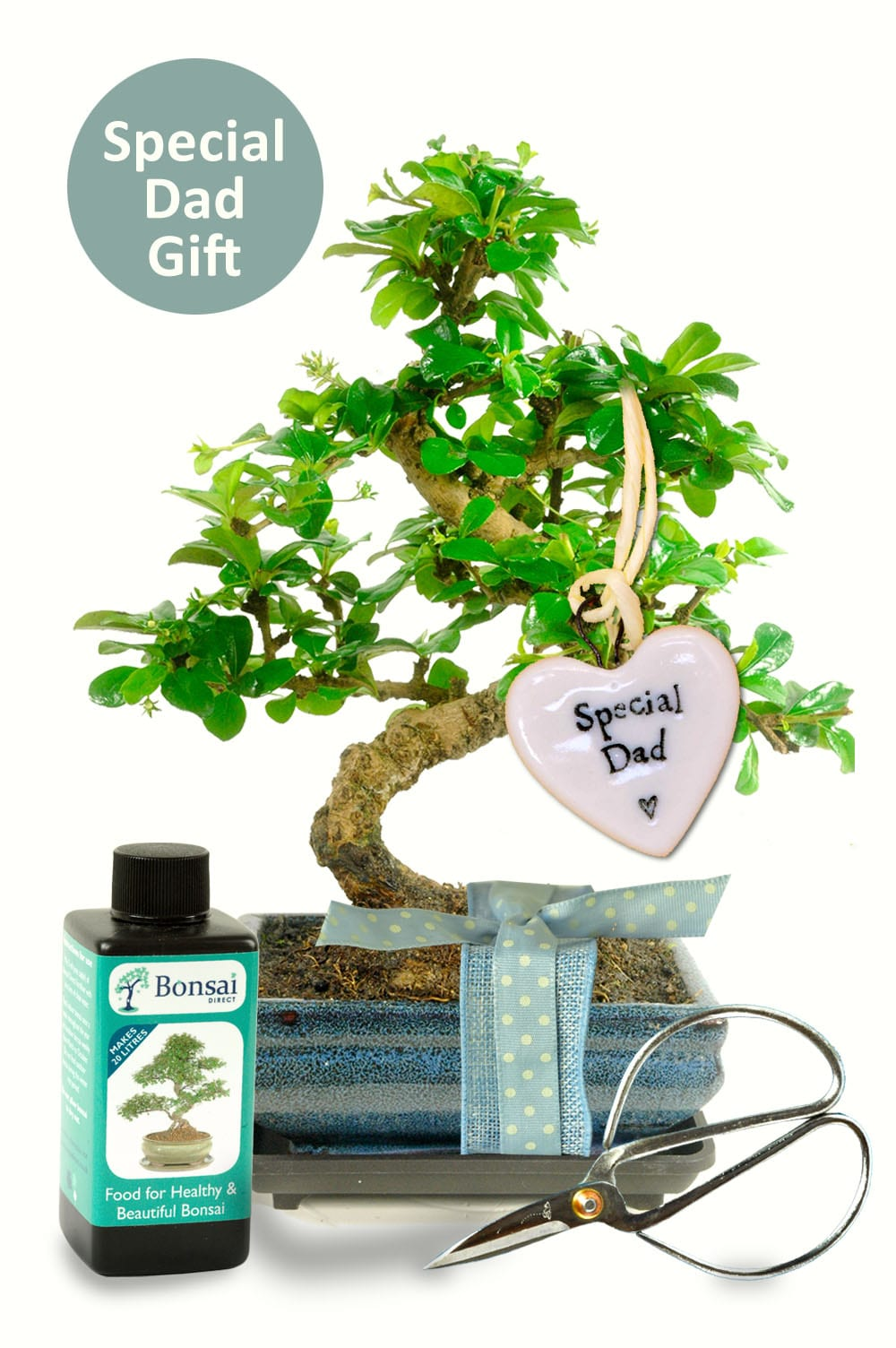 Twisty flowering Dads bonsai starter set