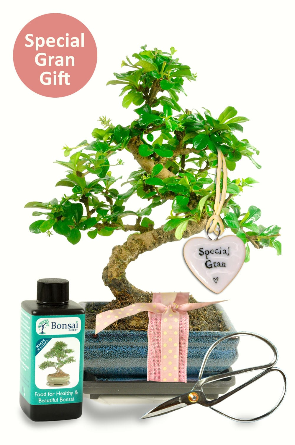 Twisty indoor bonsai for special gran