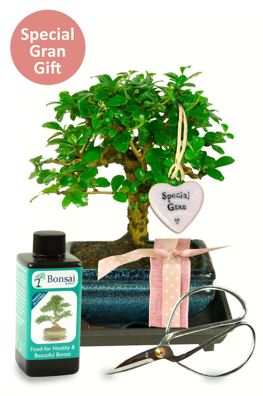 Grans birthday bonsai kit