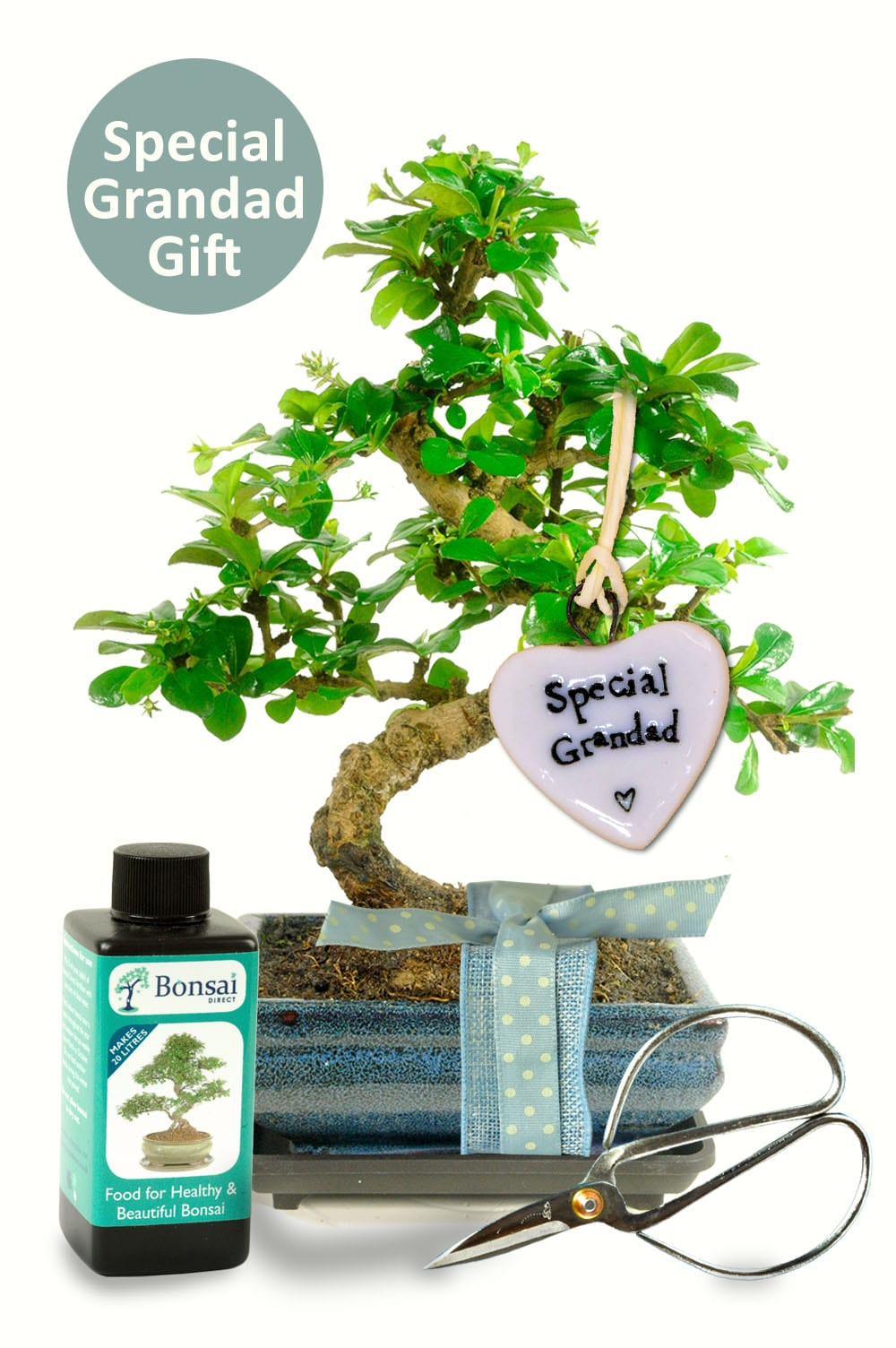 Special Grandad Bonsai birthday gift