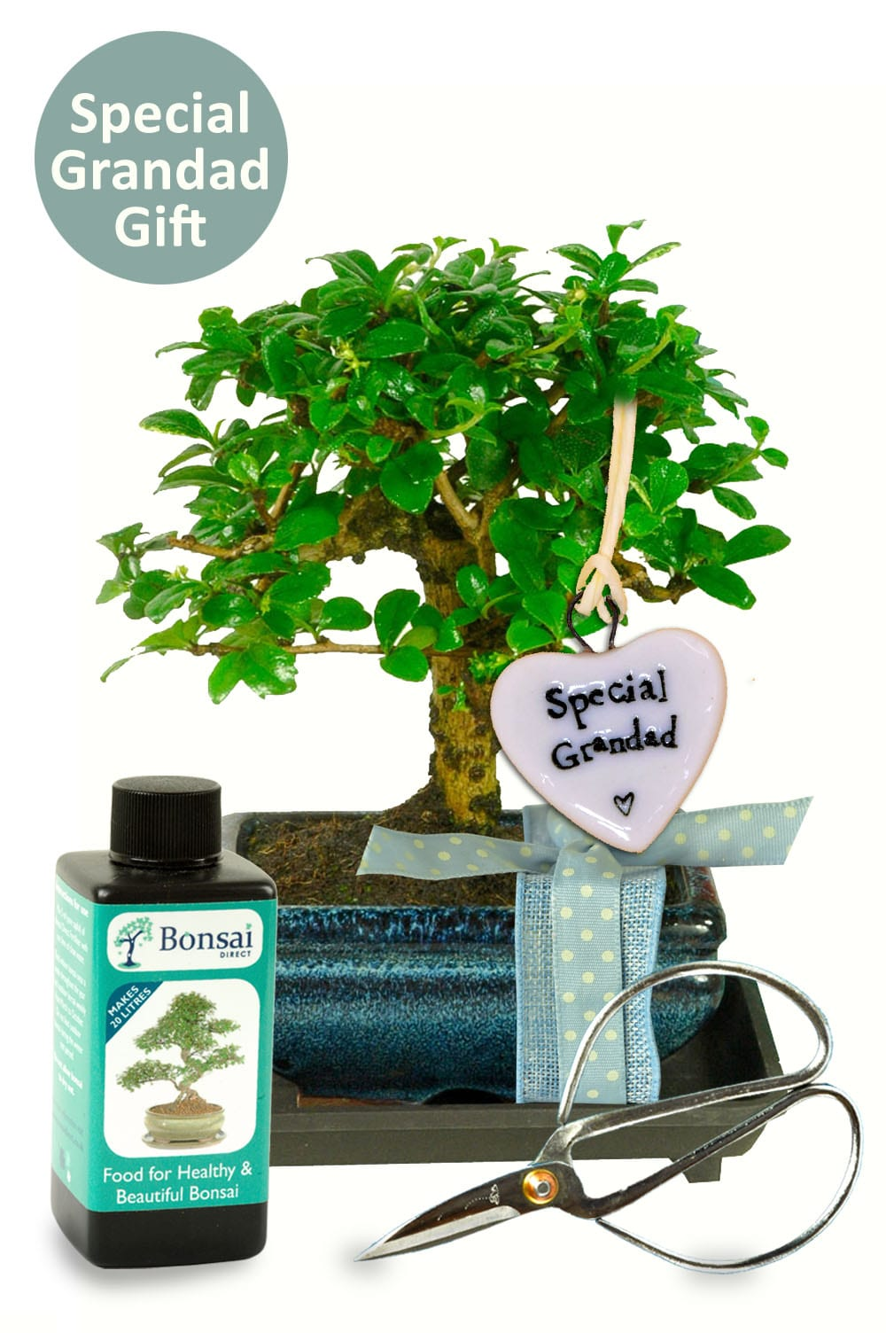 Grandads birthday bonsai starter kit
