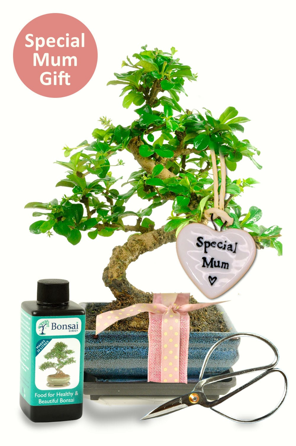 Special Mum bonsai starter kit