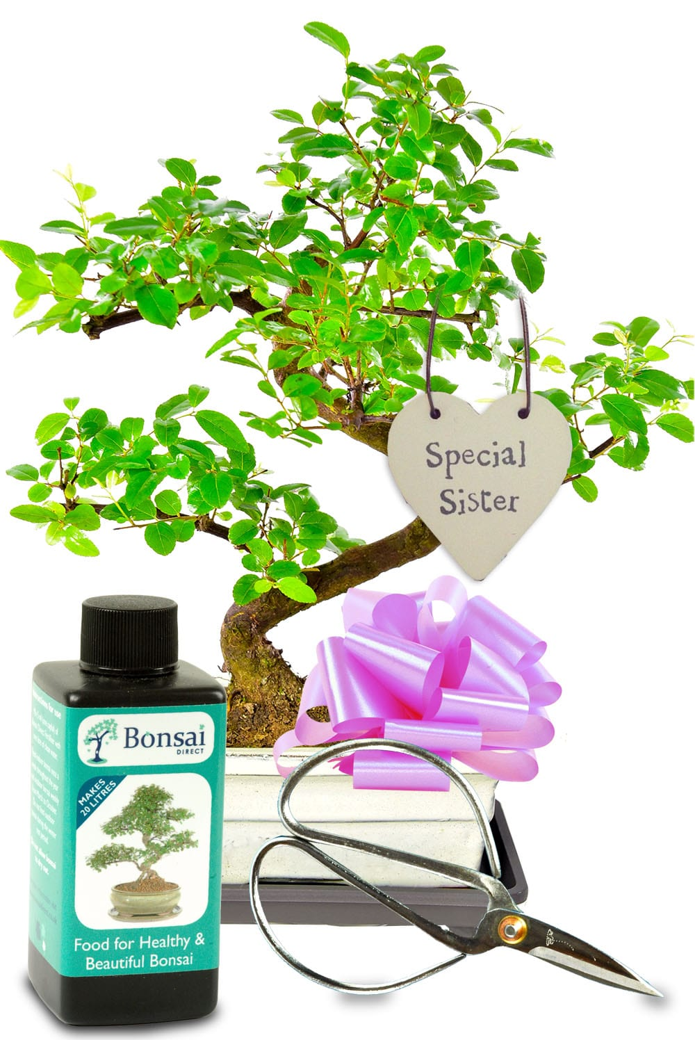 Fruiting bonsai gift for your sister
