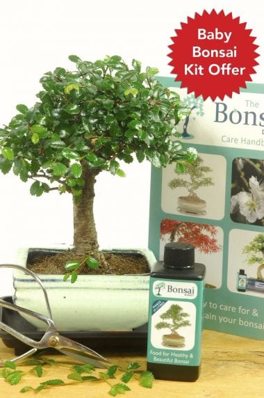 Comprehensive baby bonsai kit offer for sale