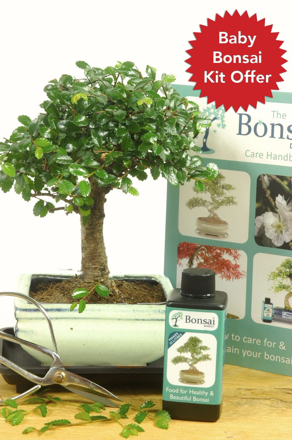 Top Selling Baby Bonsai Tree Kit For Sale From Bonsai Direct