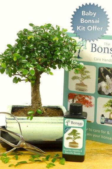 Comprehensive beginners baby bonsai offer