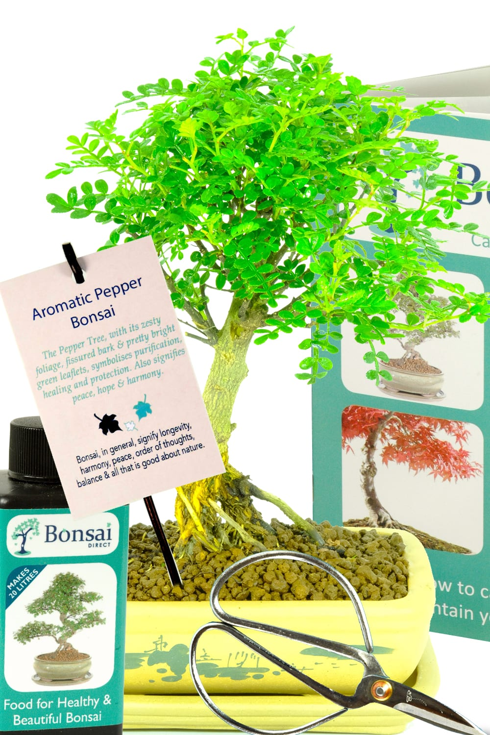 Stunning premium range pepper bonsai kit for health and healing