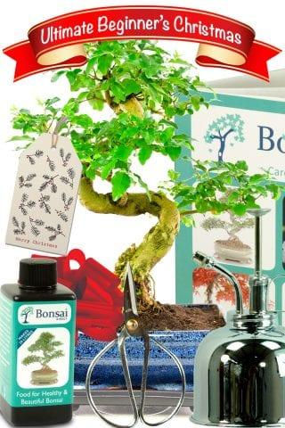 The ultimate christmas bonsai gift