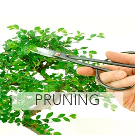 Bonsai pruning tools for sale