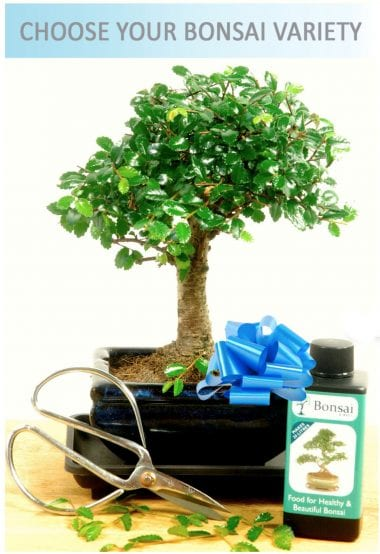 Baby indoor bonsai tree kit for sale with free delivery