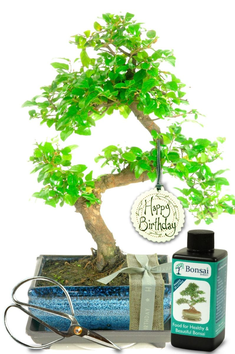 The perfect birthday tree gift for him or her - unique & unusual