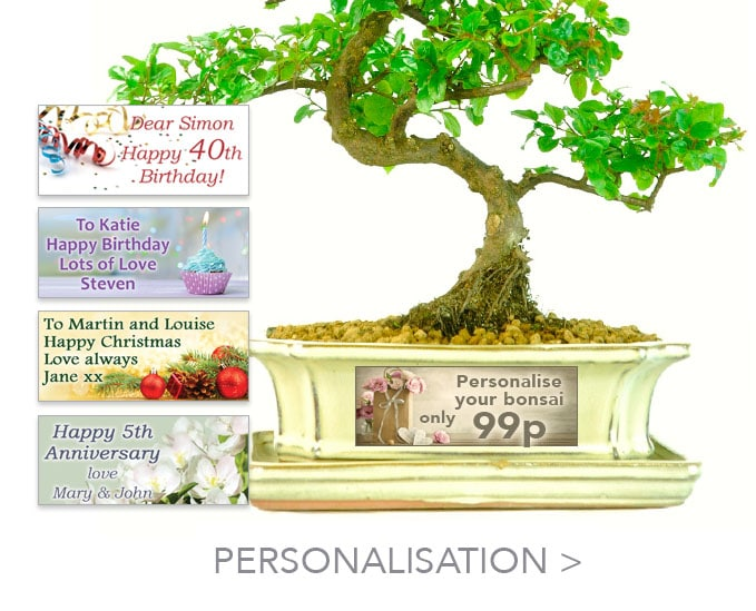Personalise your bonsai tree gift with your special message for only 99p